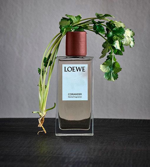 Perfumes LOEWE - Coriander Home