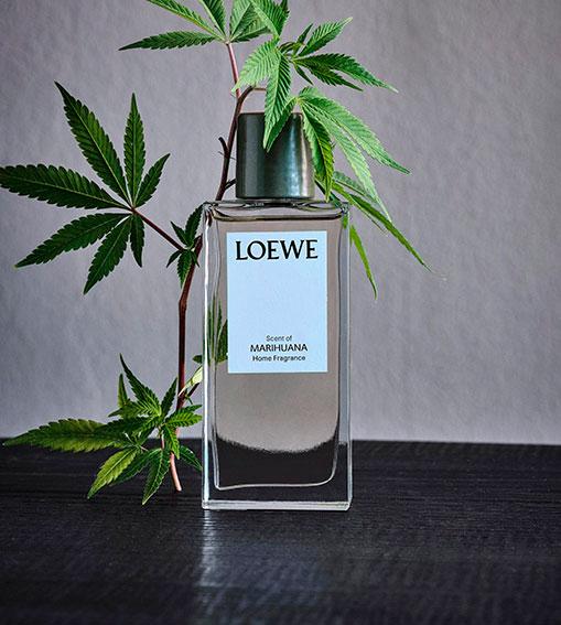 Perfumes LOEWE - Marihuana Home