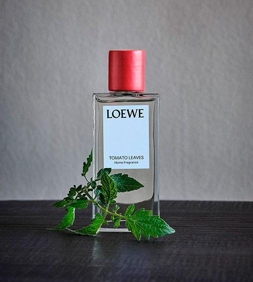 Perfumes LOEWE - Tomato Leaves Home
